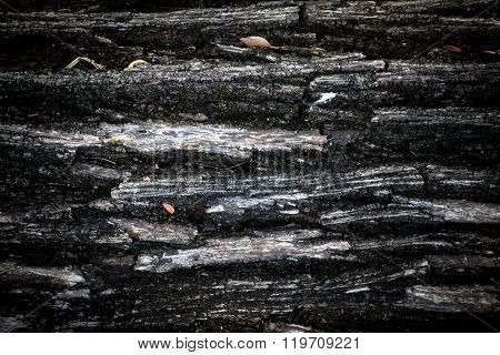 Old And Weathered Crack Wood Bark
