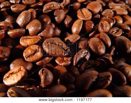 Coffee Beans Four