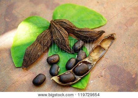 Velvet Bean Over The Green Leaf
