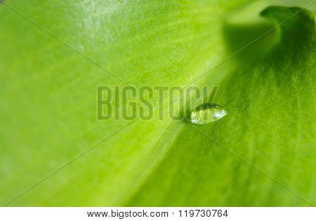 Macro Of Drop On Leaf