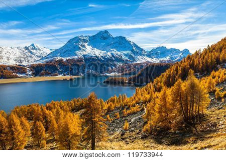 Stunning View Of Sils Lake And Piz Da La Margna In Golden Autumn
