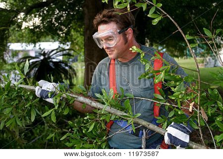 A worker hauling tree branches.