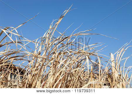 Yellow Dry Grass Field