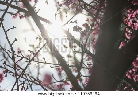 Spring blurred background with beautiful cherry blossom and sun beam light - background wallpaper
