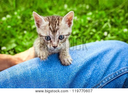 Little cat on knee, grass on background, outdoor
