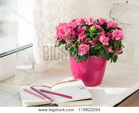 blooming pink azalea in pink flowerpot white rustic background