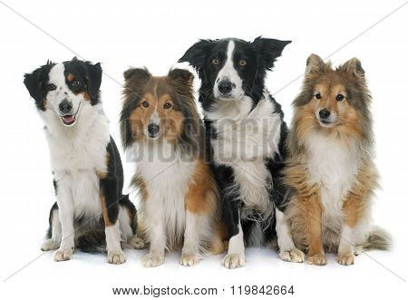 Four Beautiful Dogs