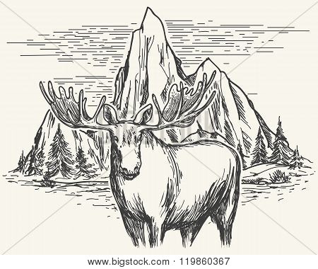 Hand Drawn Landscape With Moose