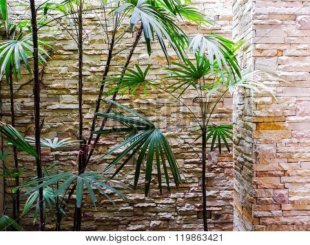 lady plam tree and brick background