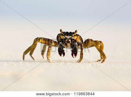 Macro photo of crab on the beach