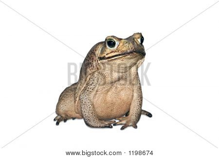 Cute Toad