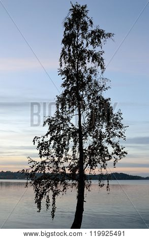 Tree Silhouette On The Lake At Sunrise.