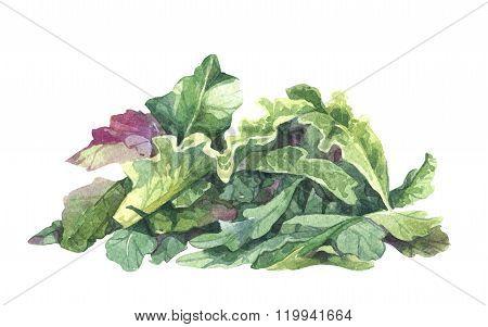Watercolor rucola salad
