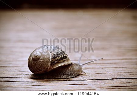 closeup of a land snail on a rustic wooden surface