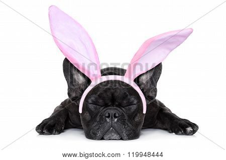 bulldog dog wearing funny easter bunny ears