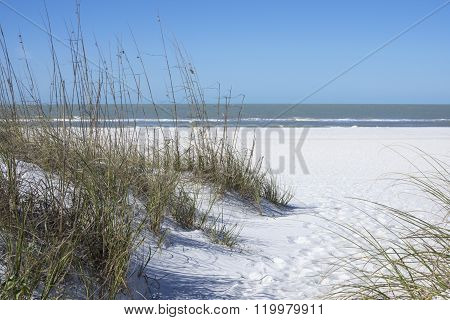 Sea Oats And White Sand Dunes On Beach In St. Petersburg, Florida