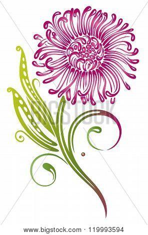 Chrysantheme, flowers