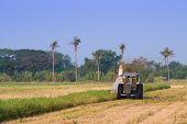 Harvester machine to harvest rice field working. Combine harvester agriculture machine harvesting rice field. Agriculture background. poster