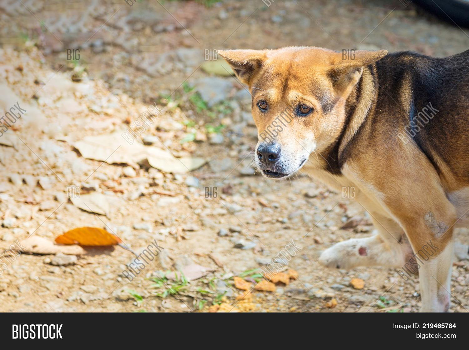 Brown Stray Dog That Image & Photo (Free Trial) | Bigstock