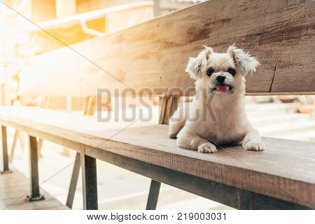 Dog Sitting In Cafe Looking At Something