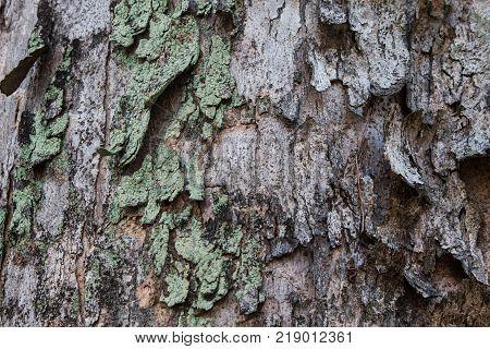 Ancient Wood Pillar Texture