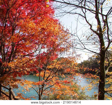 Colorful leaves of trees at the lakeside in autumn.