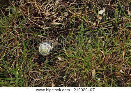 a snail crawling in the grass at the Giant's Causeway, Northern Ireland