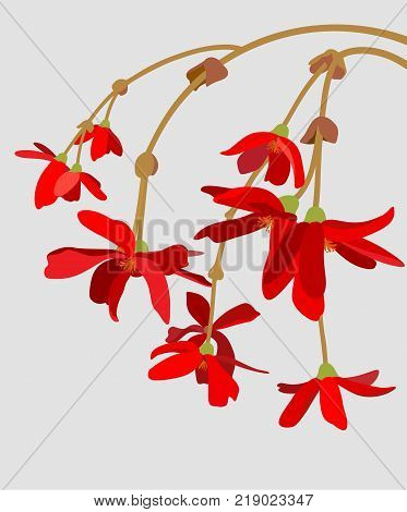 twig of red flowers on a light background
