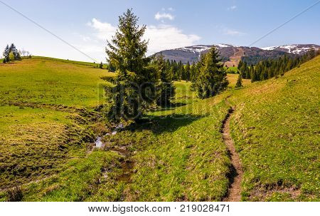 path through grassy in to the forest. beautiful springtime landscape with snowy mountain tops in the distance