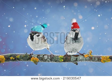 pair of funny birds Sparrow sitting on a branch in winter garden in a humorous knitted hats