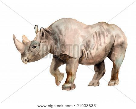 Watercolor Image Of Rhino On White Background