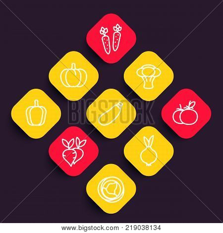 Vegetables icons set, courgette, carrot, broccoli, pumpkin, cabbage, beet, tomato, onion linear pictograms