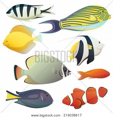 Aquarium or aquaria colorful fishes, fish tank or bowl fauna. Discus and heros, flounder and emperor angelfish, uaru and hypselecara. Saltwater wildlife and cartoon seafood, nautical theme