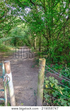 Opening to a forest walk along a sun dappled track. Summer shot in the late afternoon.