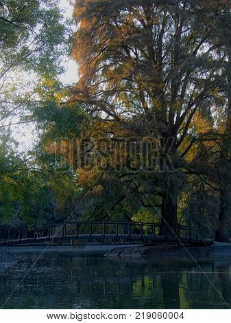 Tree and bridge in one of the smaller lakes of Chapultepec Park in Mexico City, Mexico
