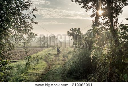Boys riding on bicycle among green field, Nepal