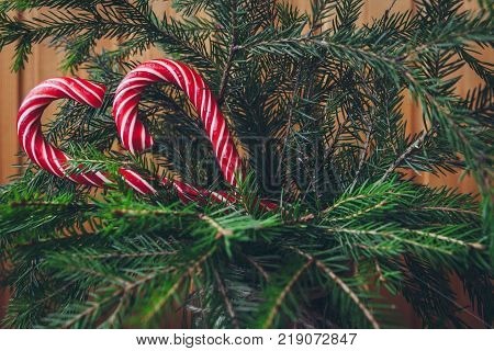 Candy Cane On A Christmas Tree