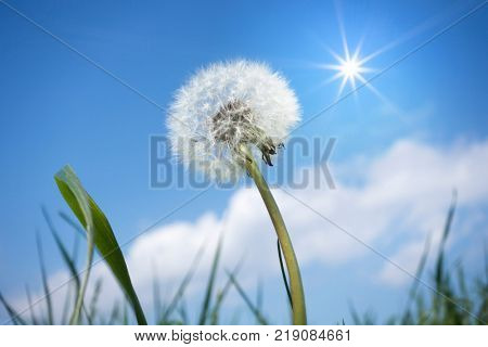 An image of a dandelion flower in front of the blue sky
