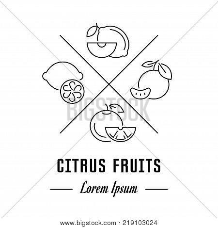 Vector logo citrus fruits. Hipster emblem label or banner for citrus fruits. Line sign with elements. Concept brand.