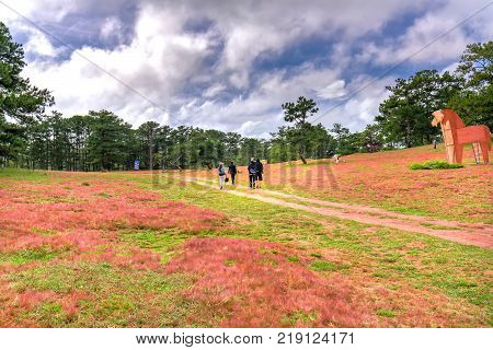 Da Lat, Vietnam - November 27th, 2017: Tourists visiting amazing landscape in morning with pine forests, pink glass hills contrast creating great scenery for ecotourism  highlands in Da Lat, Vietnam