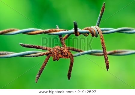 Barbed Wire In Green