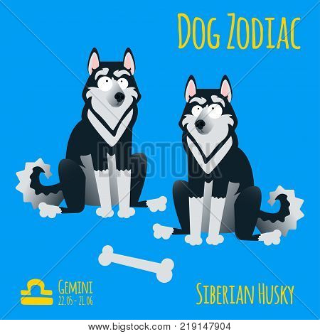 Illustration Of A Zodiac Sign With A Funny Dog. Husky Gemini.