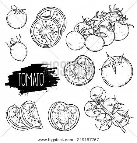 Hand drawn tomato set. Tomatoes slices halves cherry tomatoes and bunch isolated on white background. Outline ink slyle sketch. Vector coloring illustration.