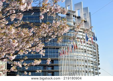 Peach Trees Bloomed Around The European Parliament In Strasbourg - France 05