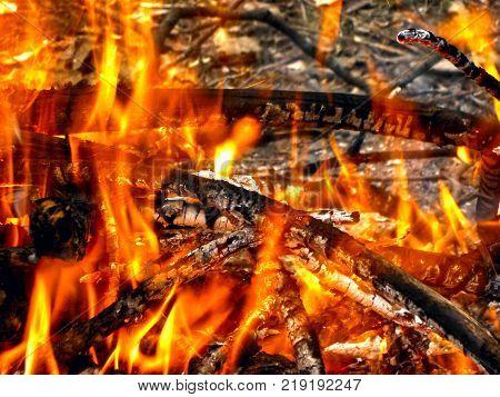 Beautiful Charcoal Fire.