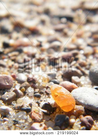 A small piece of amber on the seashore; the Curonian spit