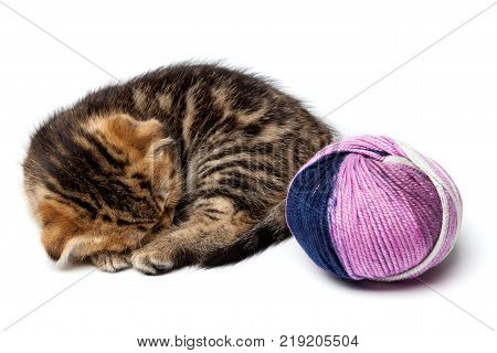 A kitten takes a nap while holding onto a red ball of yarn on a white background. One in a series