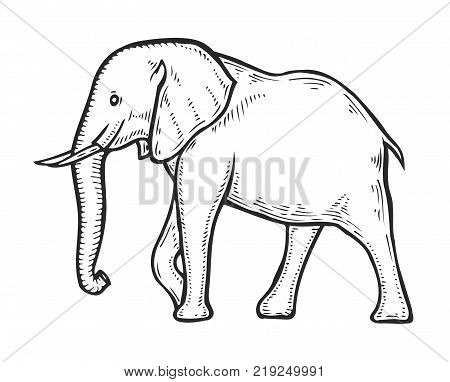 Hand drawn Elephant. Tropical exotic animal vector illustration. Engraved mammal elephant.