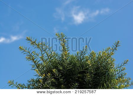 Part Of A Tree And Leaves As Background Texture