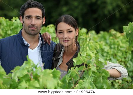 couple in the vines, they seem to be wine producers